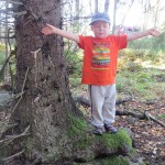 Laurin lempipuun mitat