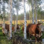 Metsälaidun