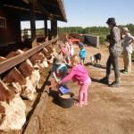 Maatilaan tutustumispäivä